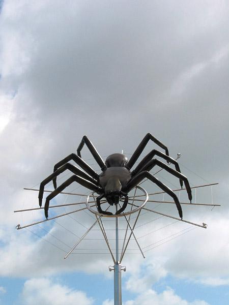 New Zealand Spiders