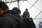 Cheeky pigeon riding a backpack at the observation deck of the Empire State Building