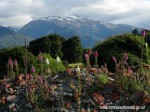 Flowers and mountains in Makarora New Zealand