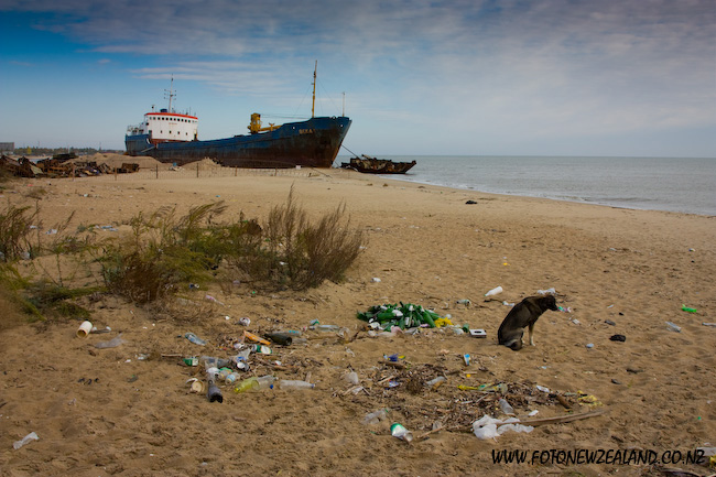 Cargo ship aground in Zatoka, Ukraine. Lonely dog on the beach.